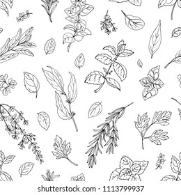 Pattern color herbs. Spices. Italian herb drawn black lines on a white background. Vector illustration. Basil, Parsley, Rosemary, Sage, Bay, Thyme, Oregano, Mint