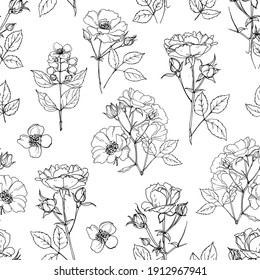 Pattern Flowers vector line drawing. Briar. Shrub roses and rose hips