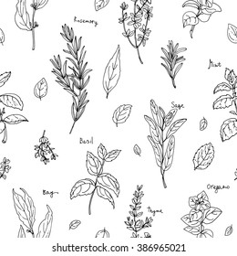 Pattern of herbs. Spices. Italian herb drawn black lines on a white background. Vector illustration. Basil, Parsley, Rosemary, Sage, Bay, Thyme, Oregano, Mint