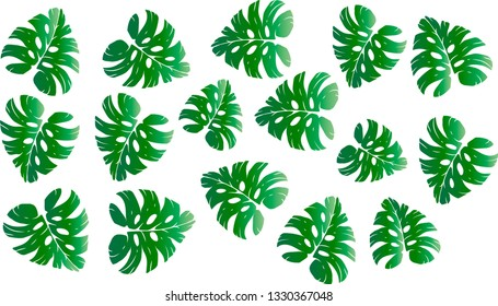 Pattern illustration of tropical leaves