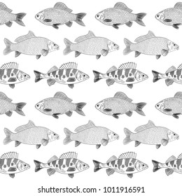 Pattern of painted river fish on a white background. Objects are located in parallel. Sketch of  river fish:carp, perch, carp. Vector illustration