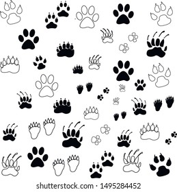 paws animals zoo dog cat