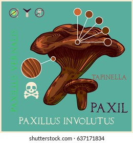 Paxil mushroom in engraved style. Subscribed with characteristics and several titles. Vector illustration with infographic elements and lettering.