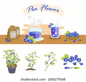 Pea flowers is a flower that can be used for cooking. By extracting the color of the flower to use It is most commonly used with hot drinks. And cold drinks
