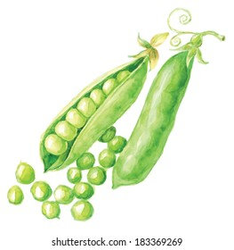 Pea pod. Hand drawn watercolor painting on white background, vector illustration.