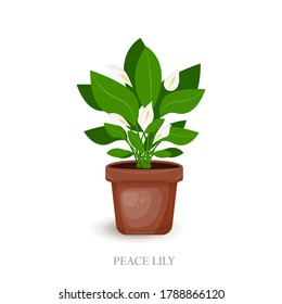 Peace Lily  in a brown pot.  Houseplant  for interior decor of home. Vector illustration on white background. Home plant isolated illustration. House plant in pots. Beautiful handmade decorations