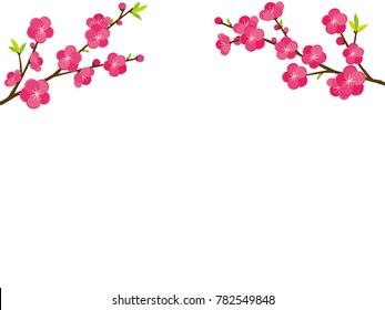peach blossom  illustrations