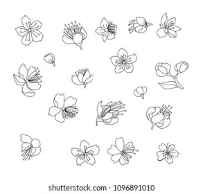 Peach flower and cherry blossom set.Sakura vector set.isolate and golden flower.