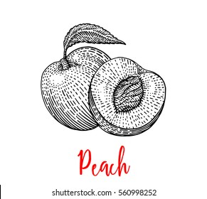 Peach gravure style, nectarine sectional, fruit with seeds inside, peach half