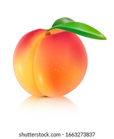 Peach vector illustration. 3d Realistic isolated vector fruit on a white background.