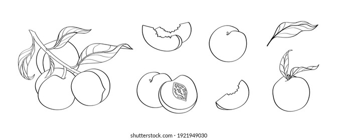 Peach vector set of stock illustrations in hand drawn doodle style. Black line art on white. Whole peaches, sliced peaches, slices, fruit on a branch, leaves.