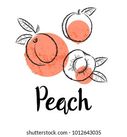 Peaches fruit handdrawn design template. Botanical fruit illustration. Vector illustration realistic sketch.