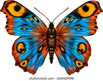 peacock eye fabulous barcode beautiful Urania Madagascar vector illustration blue yellow orange butterfly