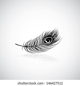 Peacock feather - vector illustration
