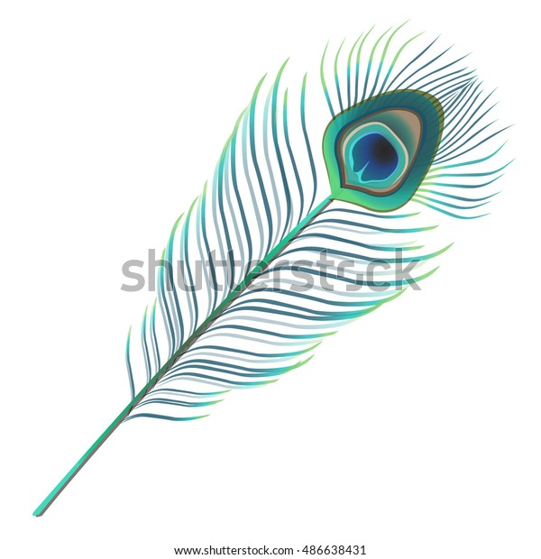 peacock feather vector illustration stock vector royalty free 486638431 https www shutterstock com image vector peacock feather vector illustration 486638431