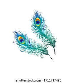 Peacock feathers on a white background. Vector Illustration