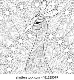 Art Peacock Drawing Designs