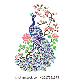 Peacock isolated in white background, Vector Illustration