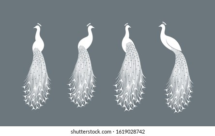Peacock logo. Isolated peacock on white background