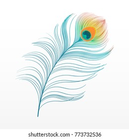peacock plume. colorful feather vector illustration