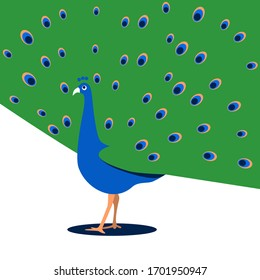 A peacock with its tail down. Vertina flat illustration