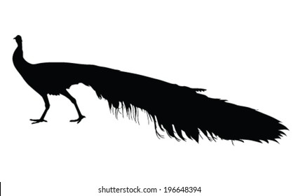 peacock vector silhouette