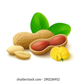 Peanuts in shell with open half, peeled kernels, flower and leaves isolated on white background. Realistic vector illustration.