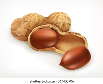 Peanuts in shell, vector icon