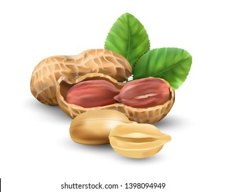 Peanuts in vector 3D illustration realistic. For packaging with peanut butter, nut mix. Vegetable protein for vegetarians, a useful product.