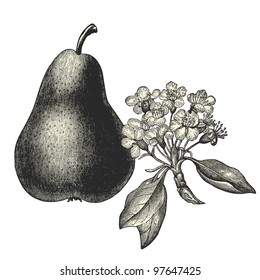 pear the vintage