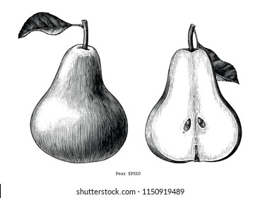 Pear fruit hand draw vintage clip art isolated on white background