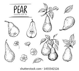 Pear illustration. Hand drawn illustration converted to vector. Isolated. Outline with transparent background