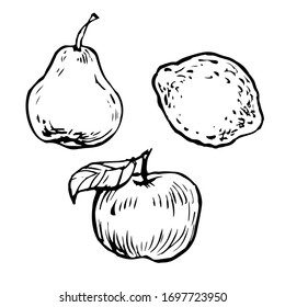 Pear, lemon and apple, black and white hand drawn ink outline sketch. Doodle illustration collection set, stock vector design for coloring book page