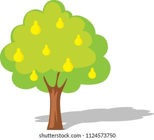 Pear tree isolated on white - flat design illustration vector