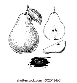 Pear vector drawing. Isolated hand drawn full pear and sliced pieces set.  Summer fruit engraved style illustration. Detailed vegetarian food  sketch. Great for label, poster, print