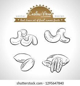 Pecan, cashew nut. Hand drawn collection of vector sketch detailed fresh fruits. Isolated