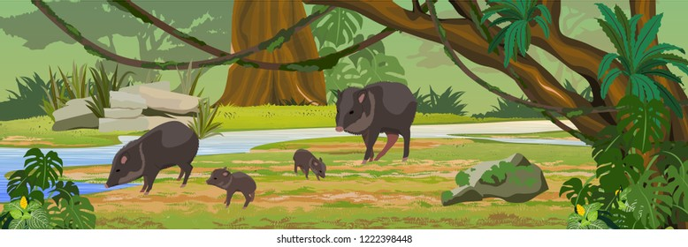Peccari family near the river in the jungle. A tropical forest. Rainforests of Amazonia. Tree, epiphytes, creepers, banana trees and monsteras. Realistic Vector Landscape