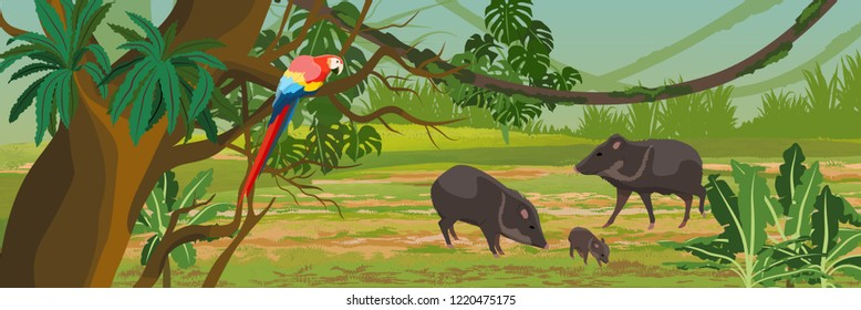 Peccary with a cub and a macaw parrot in the jungle. A tropical forest. Rainforests of Amazonia. Tree, epiphytes, creepers, banana trees, flowers and monsteras. Realistic Vector Landscape
