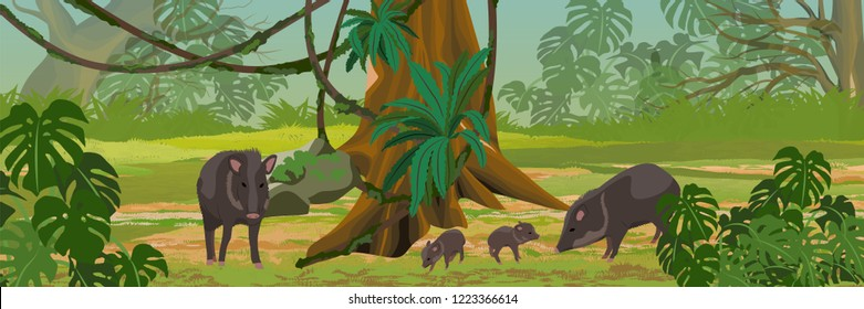 Peccary family in the jungle. A tropical forest. Rainforests of Amazonia. Tree, epiphytes, creepers, banana trees and monsteras. Realistic Vector Landscape