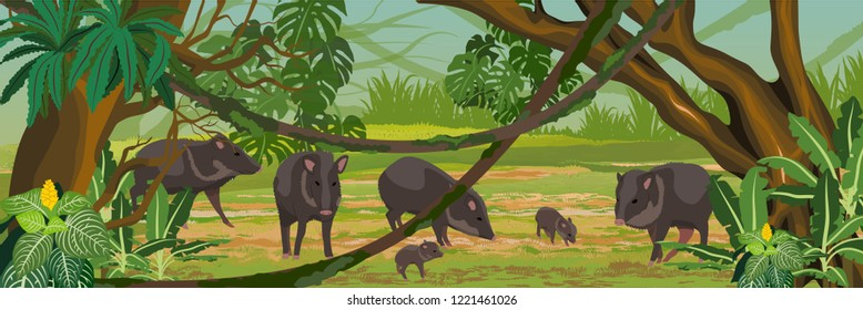 Peccary herd of adult females and males and their young in the jungle. A tropical forest. Rainforests of Amazonia. Tree, epiphytes, creepers, banana trees and monsteras. Realistic Vector Landscape