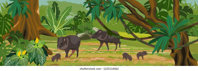 Peccary in the jungle. A tropical forest. Rainforests of Amazonia. Tree, epiphytes, creepers, banana trees and monsteras. Realistic Vector Landscape