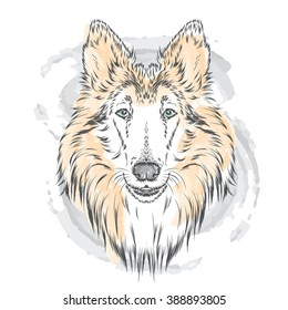 Pedigree dogs painted by hand. Collie. Vector illustration.