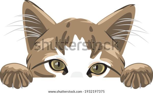 peeking-cute-cat-isolated-on-600w-193219