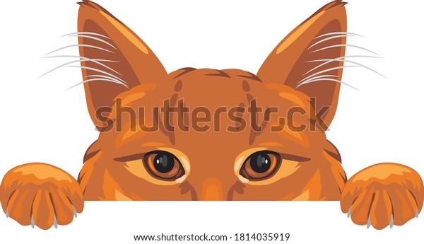 peeking-ginger-cat-isolated-on-600w-1814