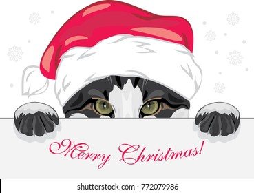 Peeping funny cat in a Christmas cap. Vector
