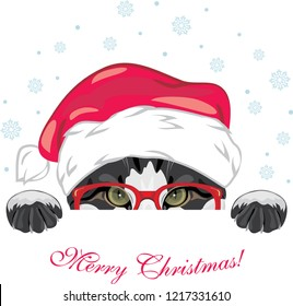 Peeping funny cat in a red glasses and Christmas cap. Vector