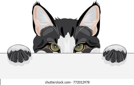 Peeping funny cat. Vector