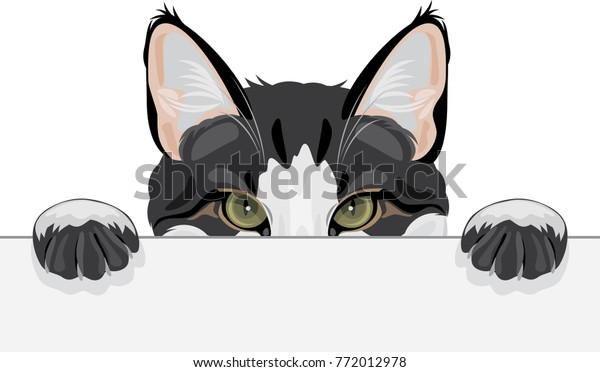 peeping-funny-cat-vector-600w-772012978.