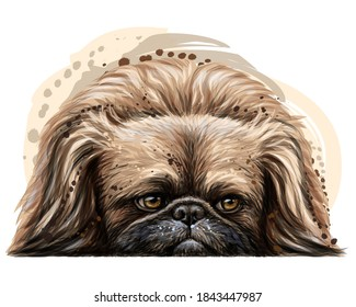 Pekingese dog. Wall sticker. Color, vector drawing portrait of a Pekingese dog in watercolor style on a white background. Separate layer. Digital vector drawing.