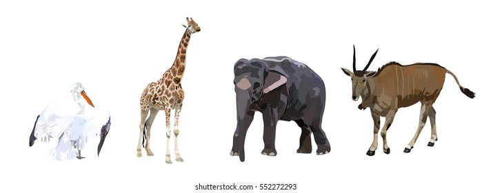 Pelican, antelope, elephant and giraffe on a white background